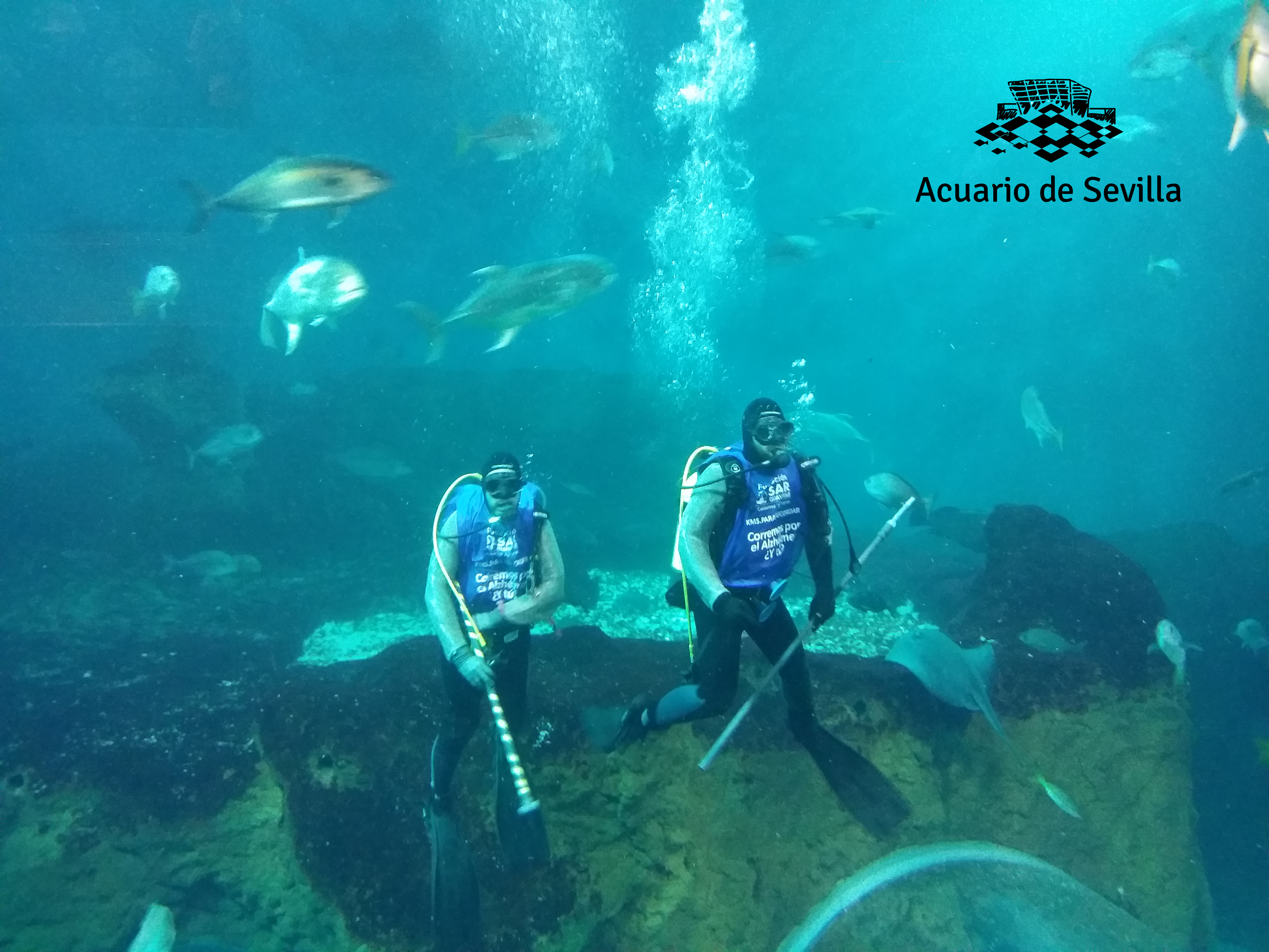 acuario de sevilla kms