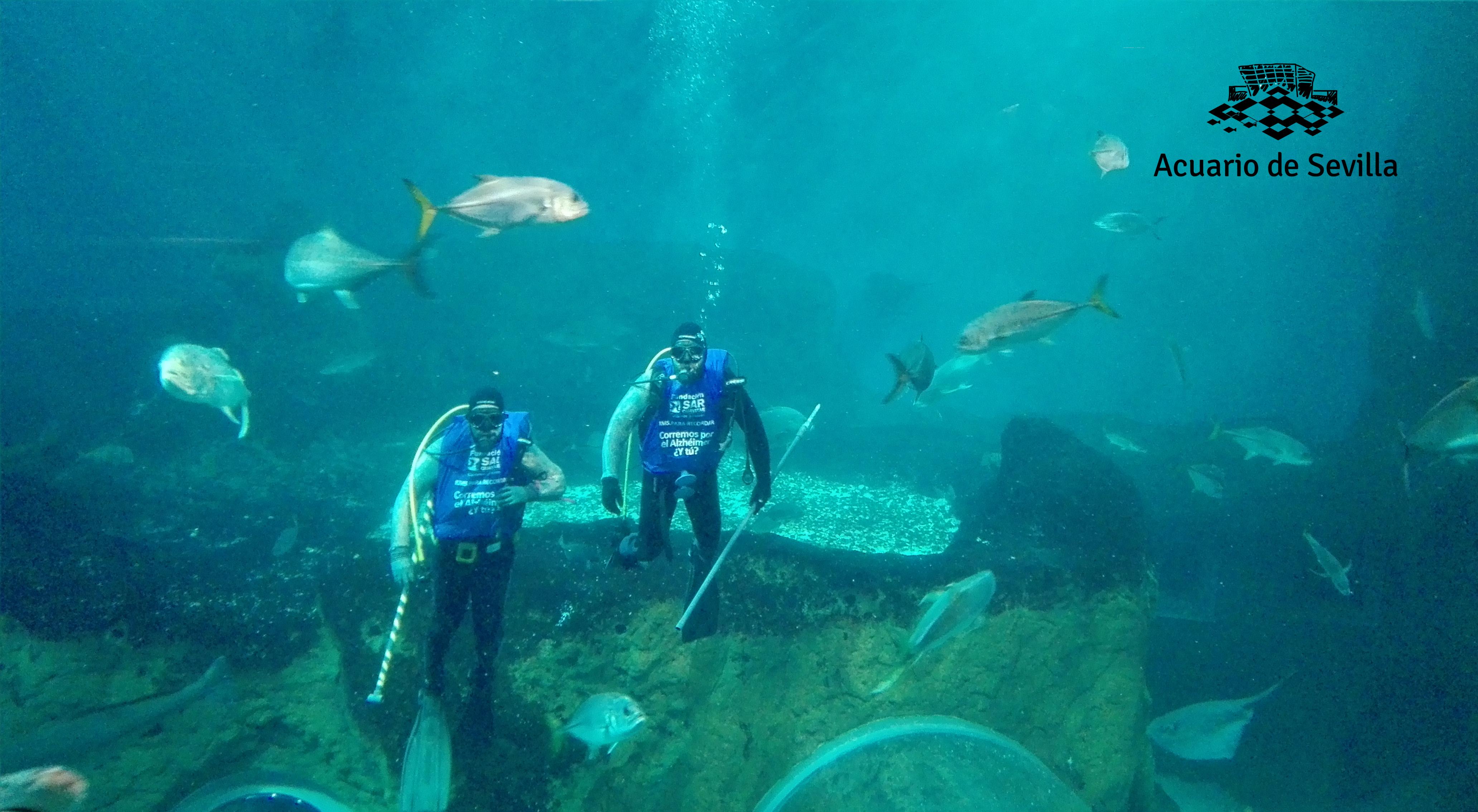 acuario de sevilla kms1