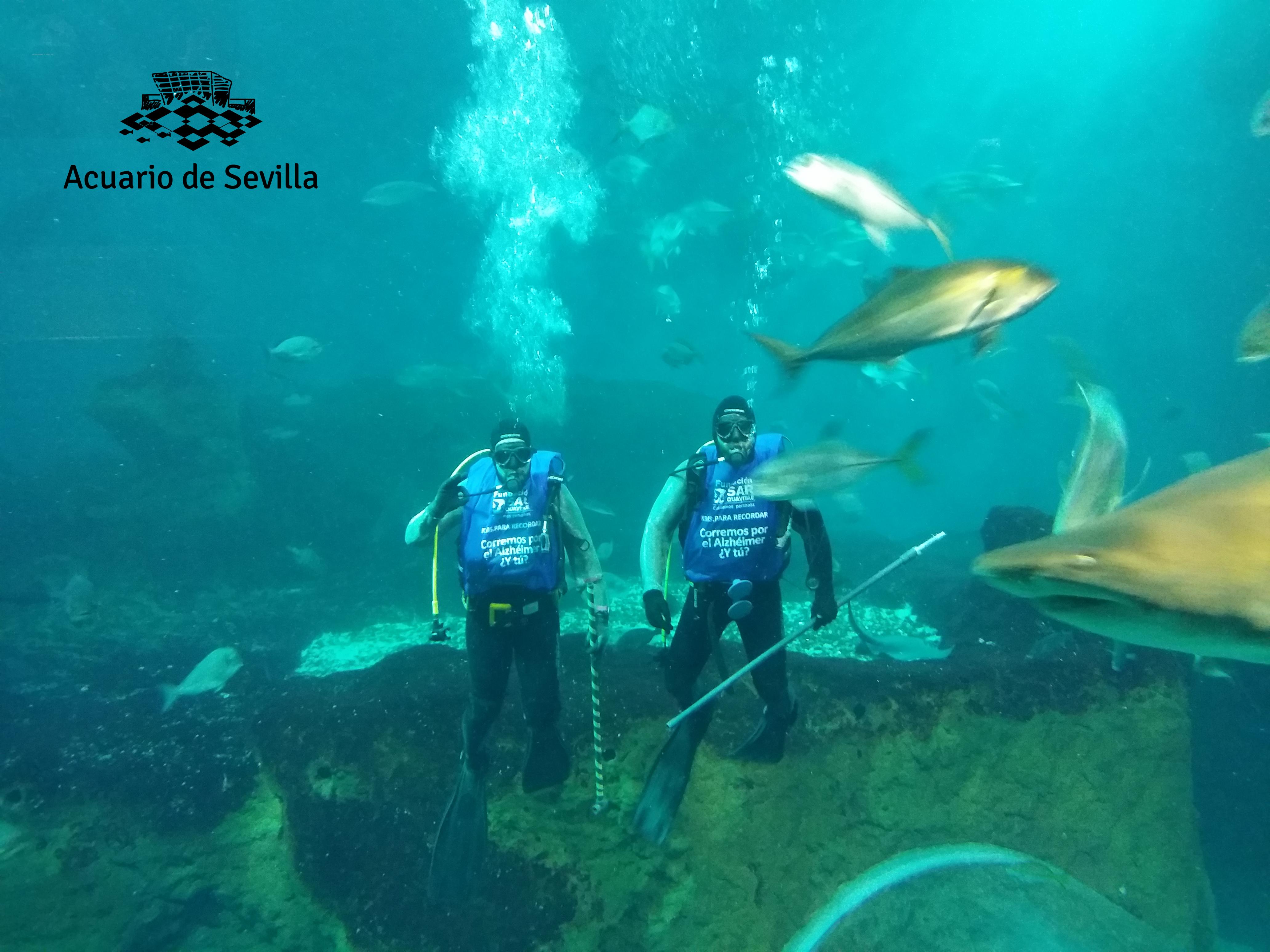 acuario de sevilla kms3