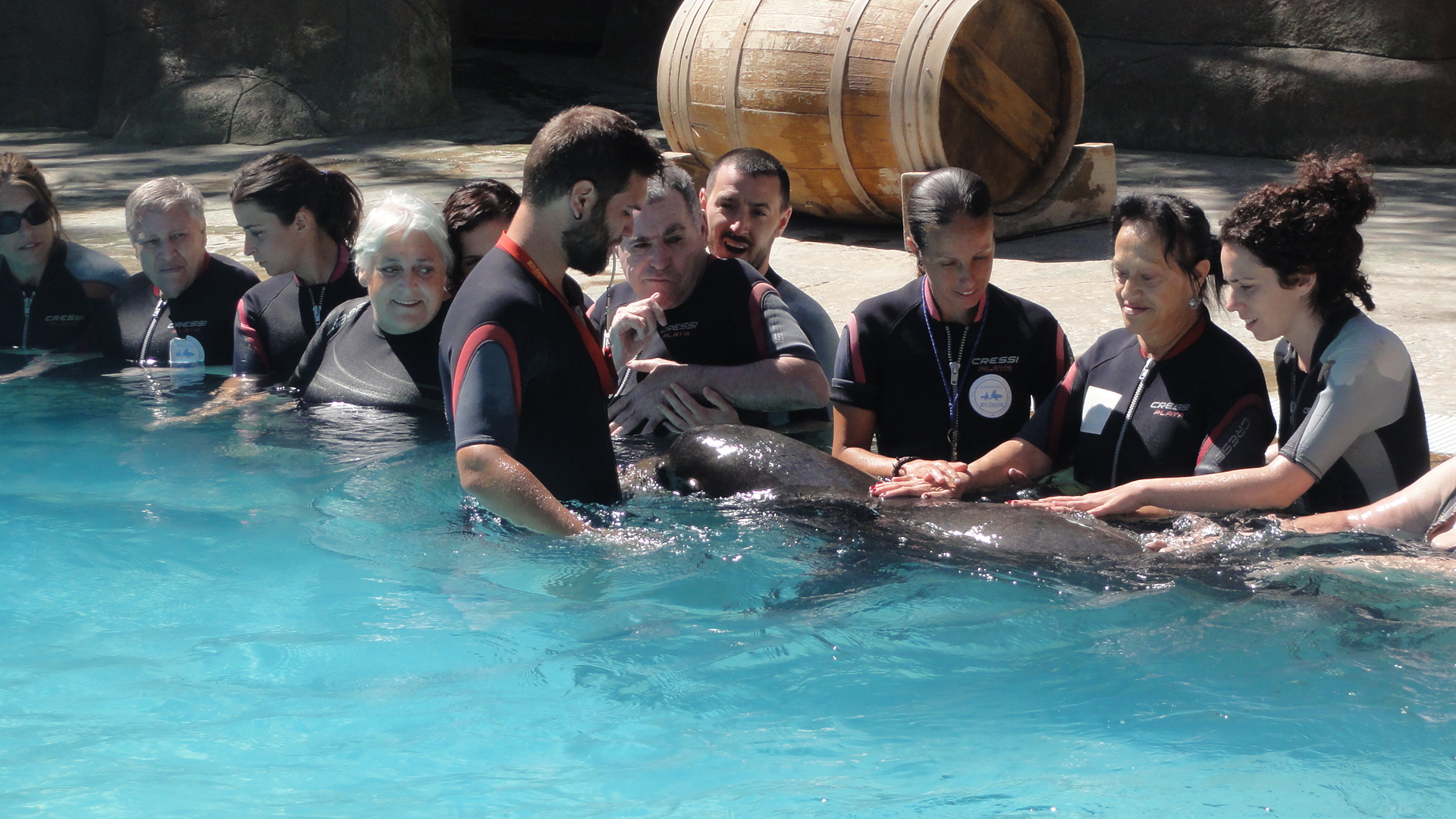face aljub leones marinos (9)