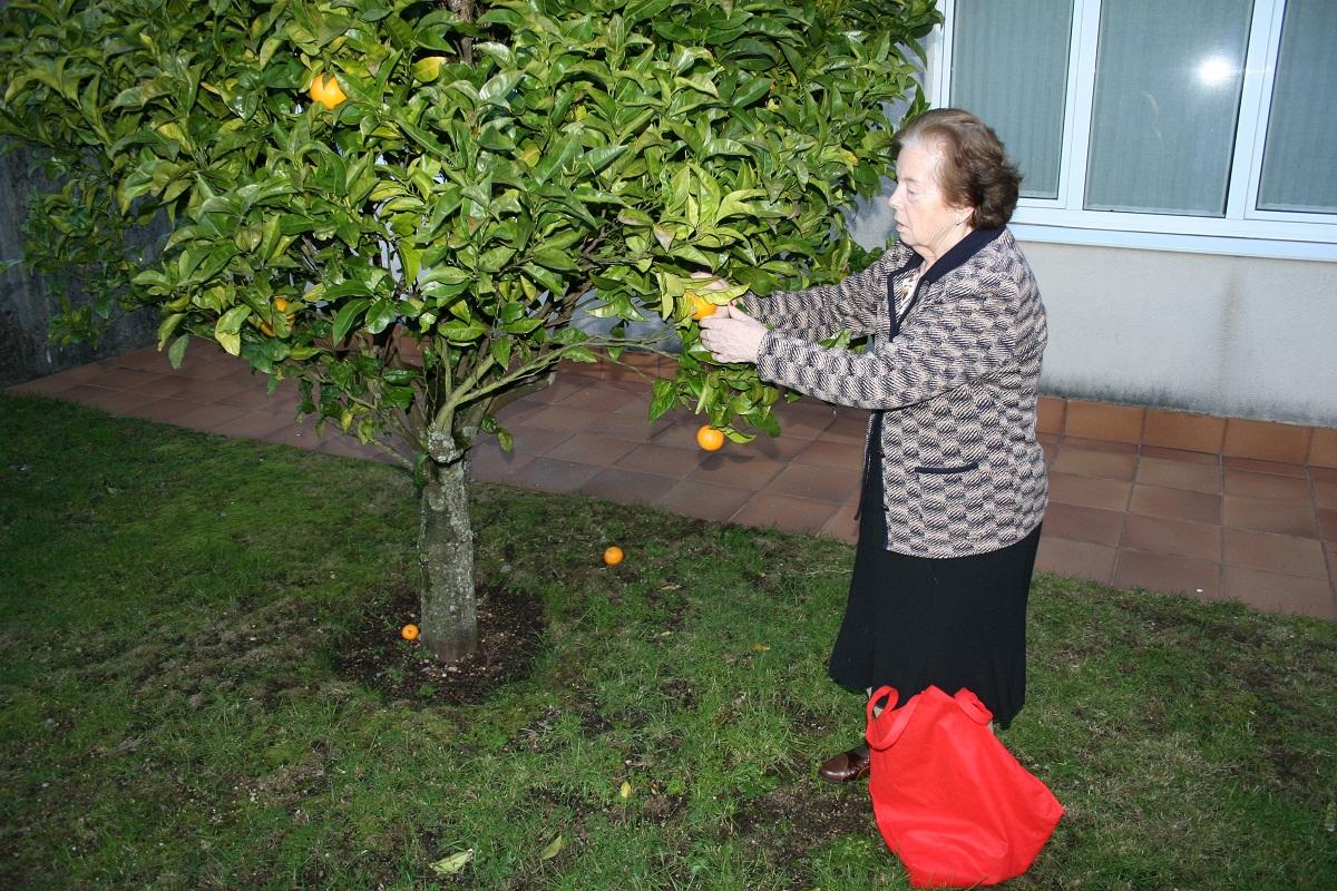 Naranjas y Ajos SARquavitae San Lázaro