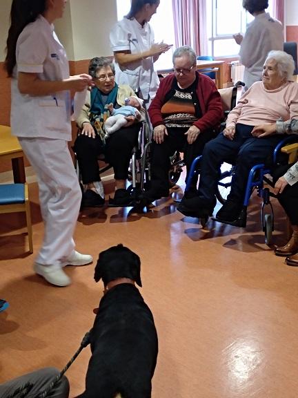 Actividad con perros - DomusVi Babel (2)
