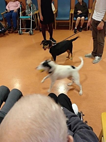 Actividad con perros - DomusVi Babel (3)