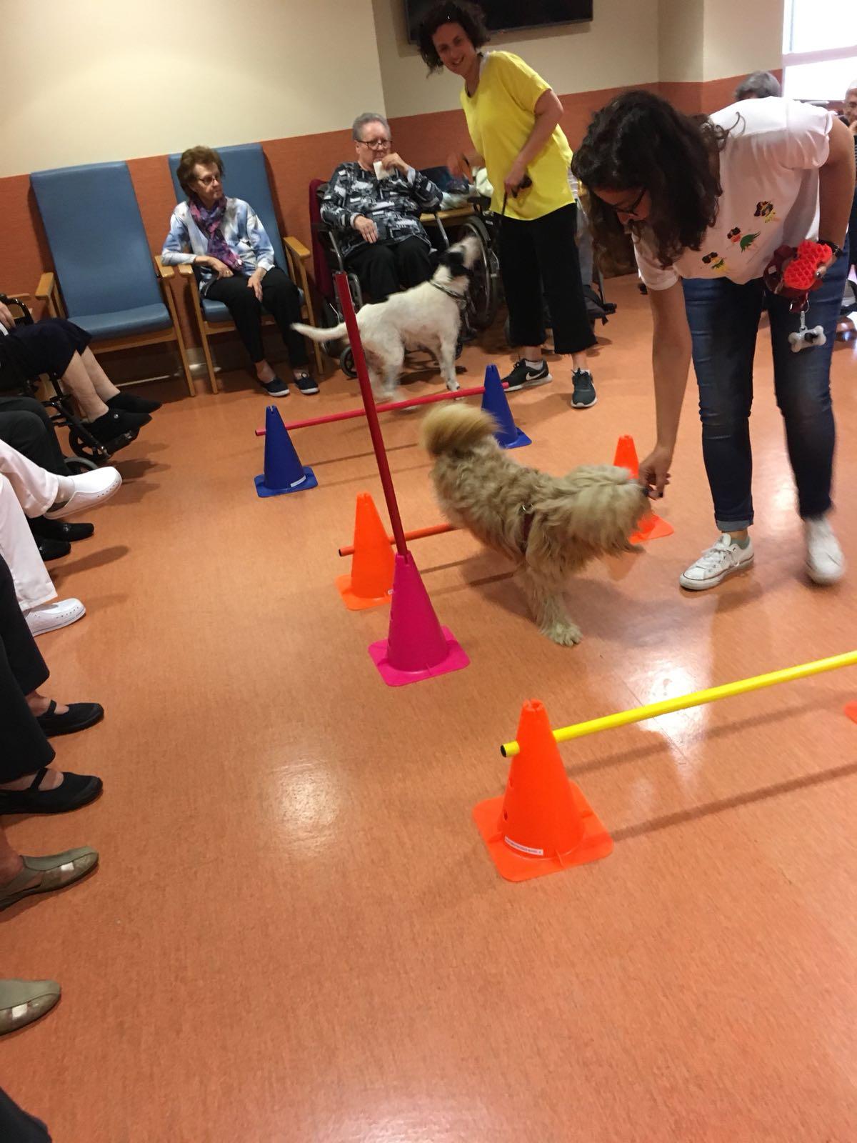 Actividad con Perros - Domusvi Babel (5)