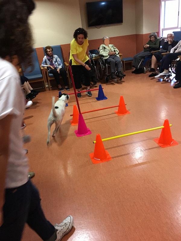 Actividad con Perros - Domusvi Babel (8)