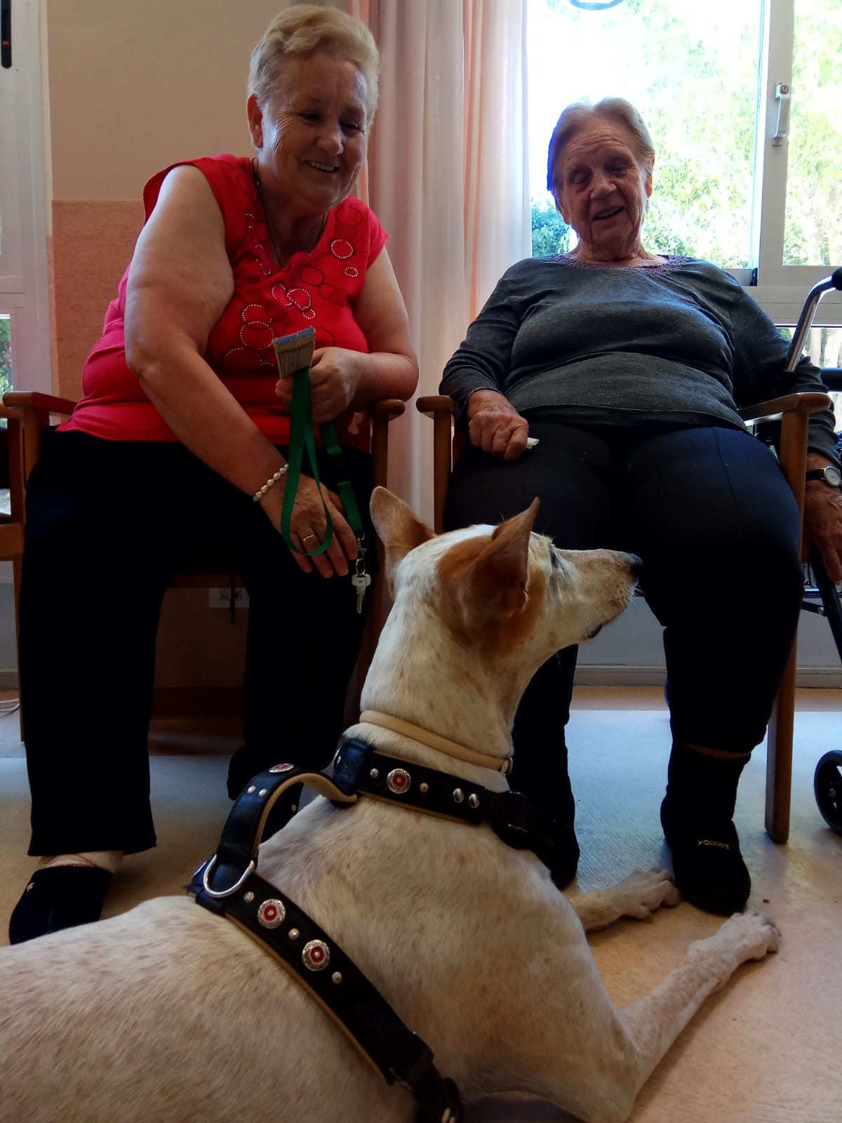 Terapia canina (4)