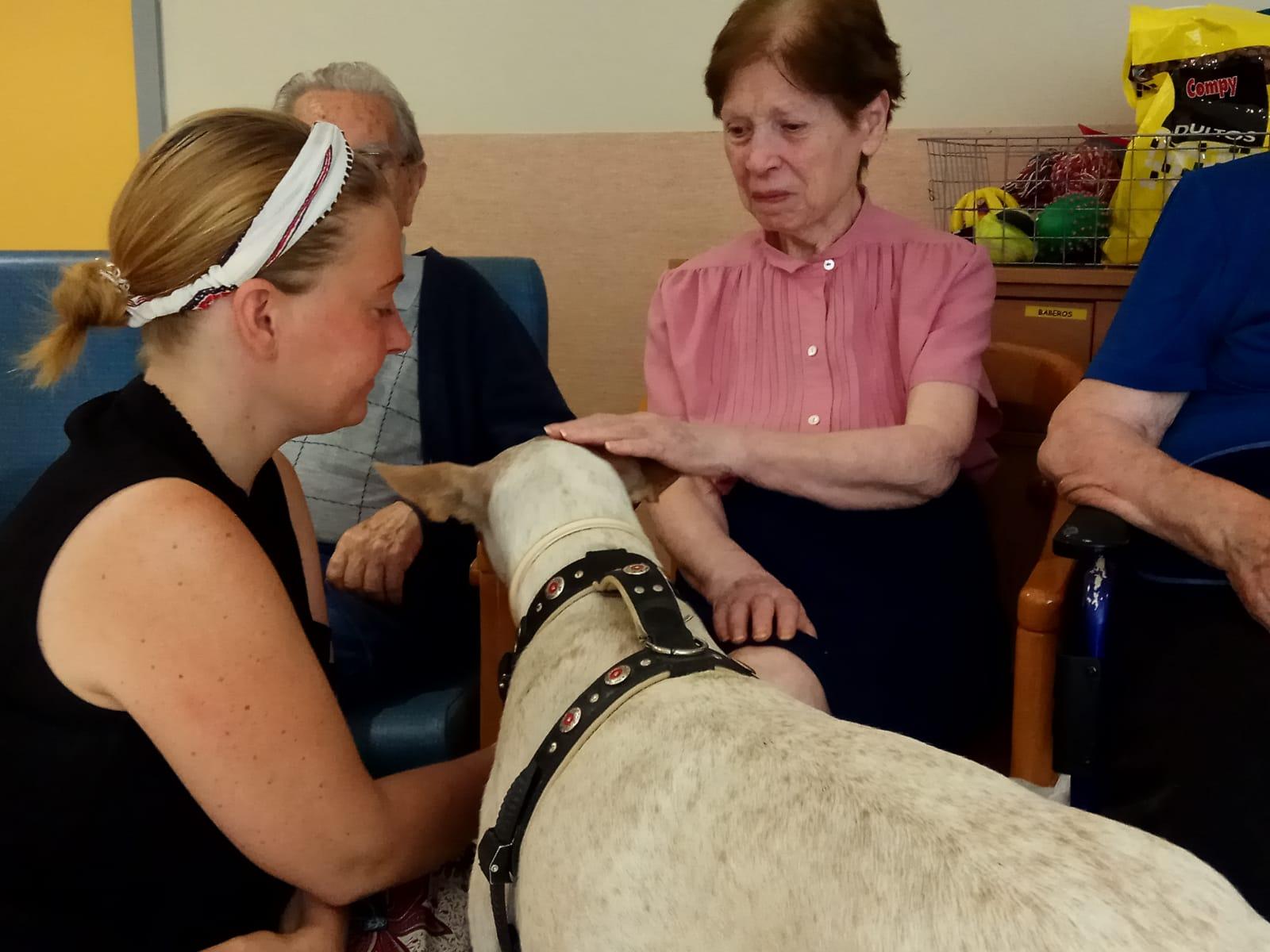 Terapia canina (9)