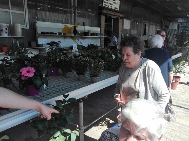 Visita de DomusVi Remedios al vivero Galeón de Lucena