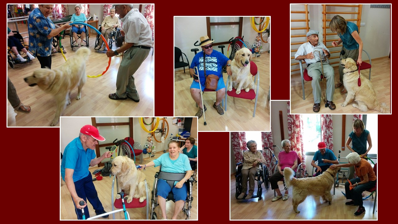 Interención asistida con animales