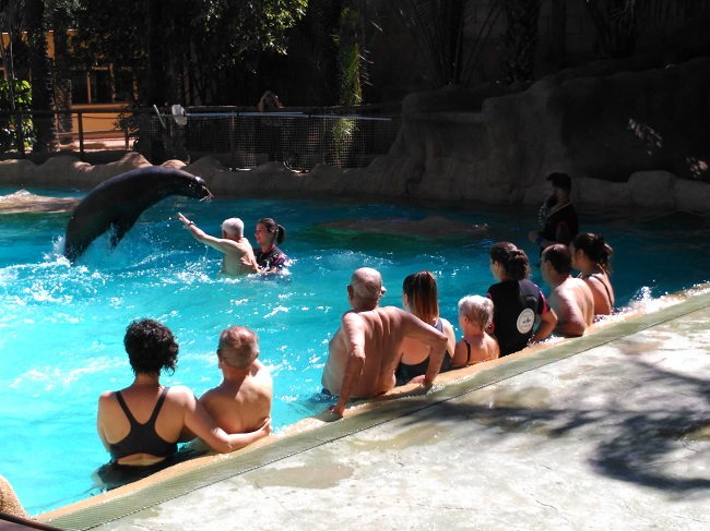 Terapia con leones marinos DomusVi Babel (3)