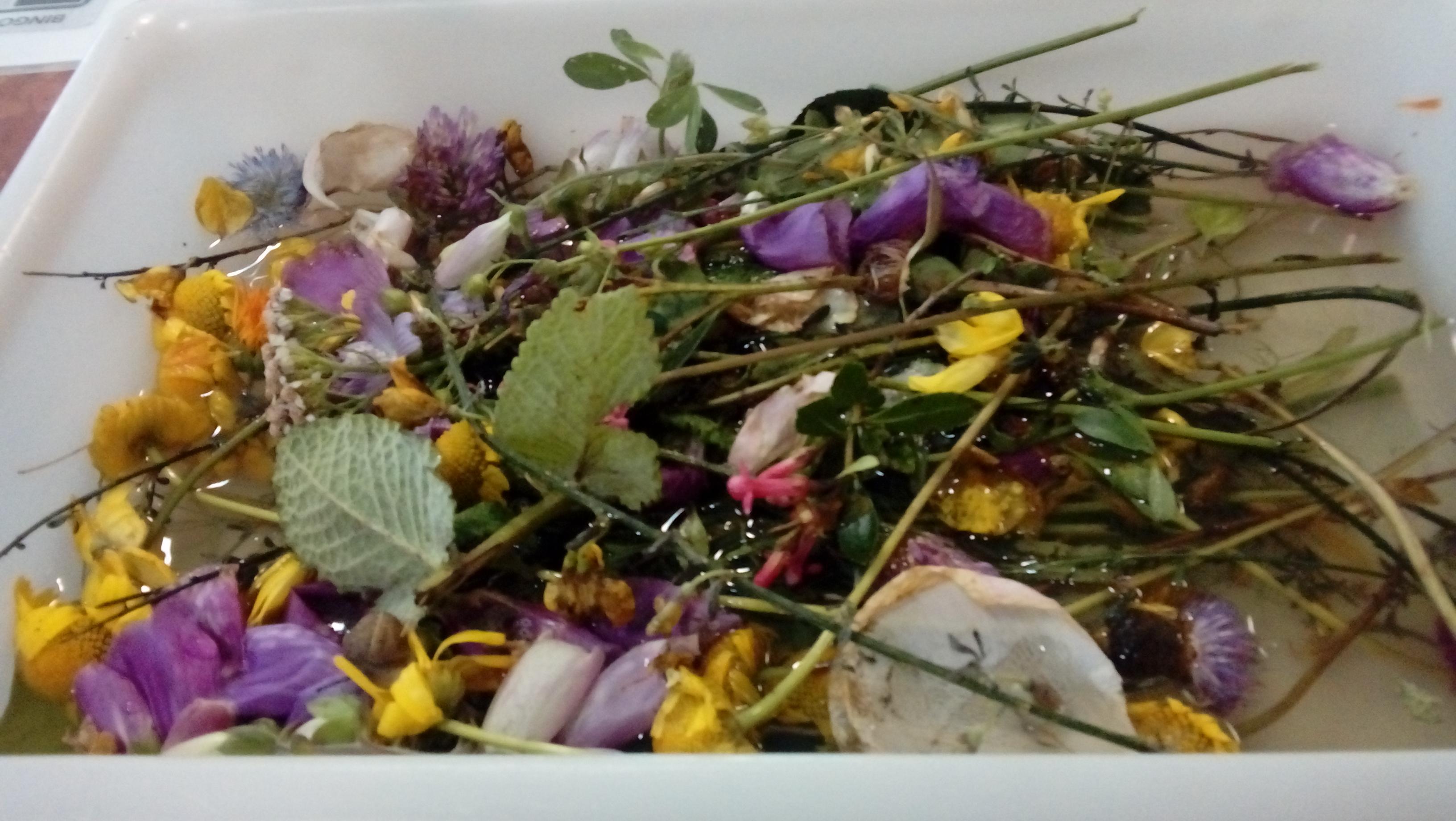 flores agua de san juan