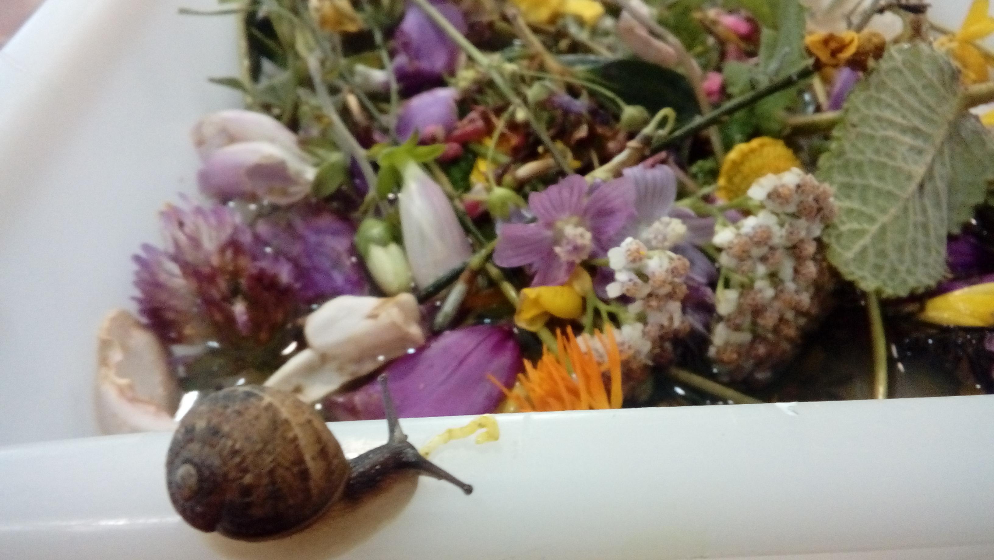 flores de san juan