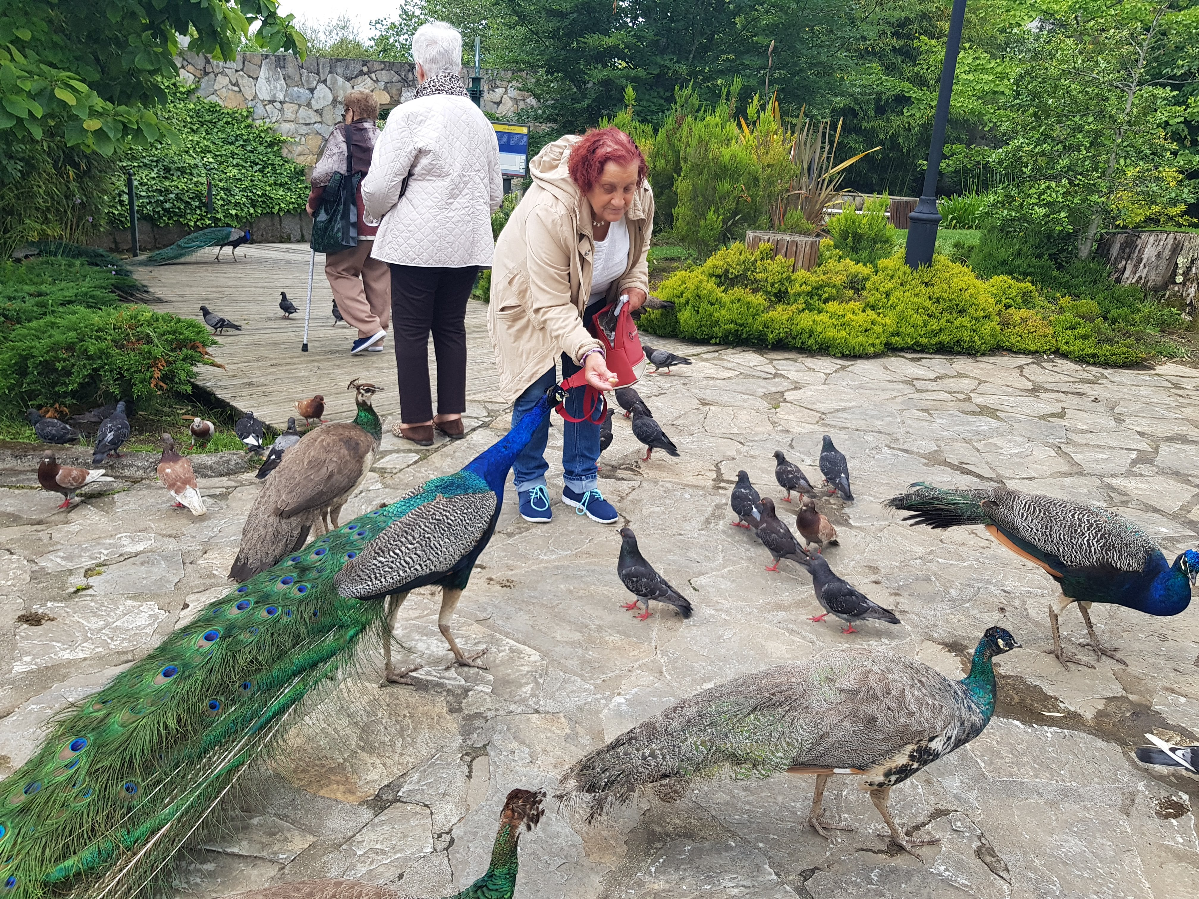 paseo polo Parque Raíña Sofía