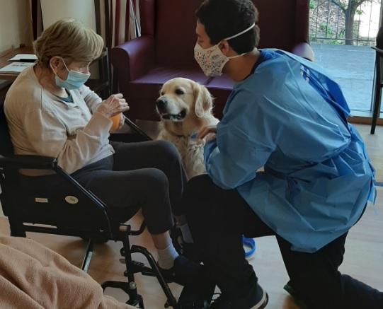 Terapia con perros DomusVi