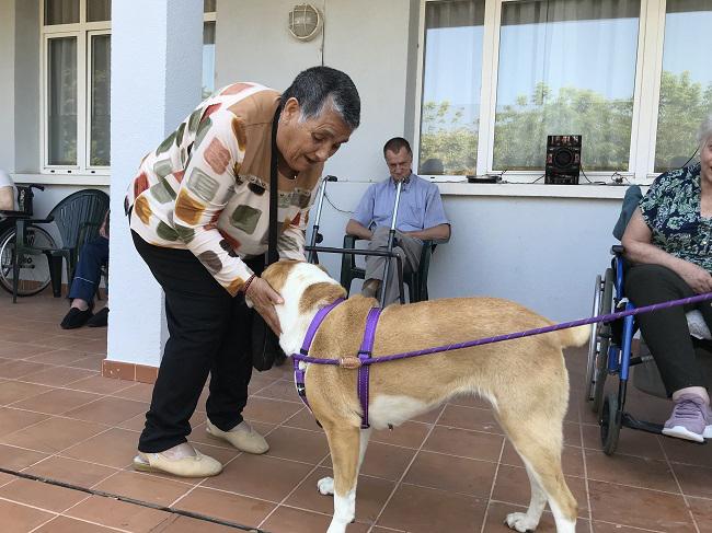 DomusVi-residencia-de-mayores-San Adrián-Día-Internacional-Del-Perro (1)