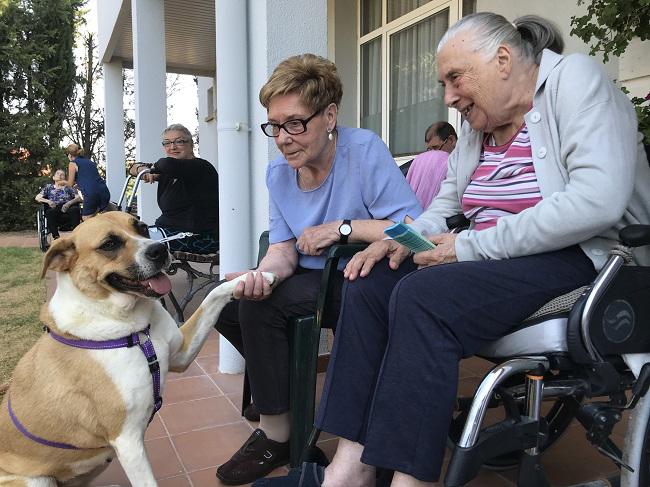 DomusVi-residencia-de-mayores-San Adrián-Día-Internacional-Del-Perro (2) PORTADA NOTICIA