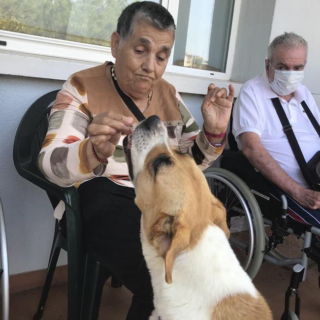 DomusVi-residencia-de-mayores-San Adrián-Día-Internacional-Del-Perro (4)