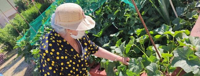 DomusVi-residencia-mayores-Newsletter-julio-huerto (2)