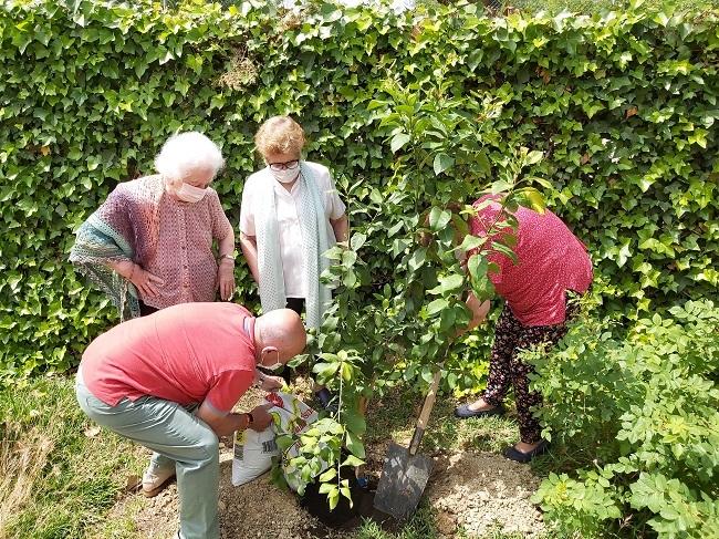 DomusVi-residencia-mayores-Newsletter-julio-huerto (4)